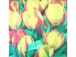 Serwetki Decoupage - Dwukolorowe Tulipany