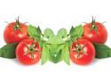 serwetki decoupage - Pomidory z Bazylią