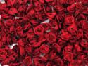Atłasowe różyczki - 5szt. bordowy