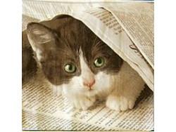 Serwetki Decoupage - Kot z gazetą