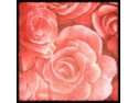 Szlachetne Róże